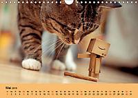 Peppi - Das Leben eines Danbo (Wandkalender 2019 DIN A4 quer) - Produktdetailbild 5