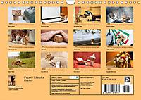 Peppi - Das Leben eines Danbo (Wandkalender 2019 DIN A4 quer) - Produktdetailbild 13