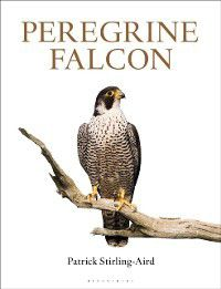 Peregrine Falcon, Patrick Stirling-Aird