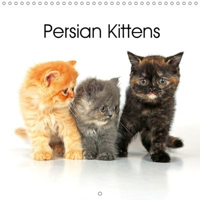 Persian Kittens (Wall Calendar 2019 300 × 300 mm Square), Klaus Eppele