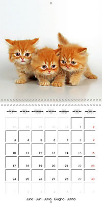 Persian Kittens (Wall Calendar 2019 300 × 300 mm Square) - Produktdetailbild 6
