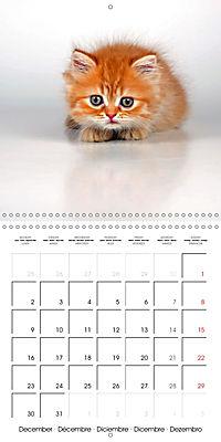 Persian Kittens (Wall Calendar 2019 300 × 300 mm Square) - Produktdetailbild 12