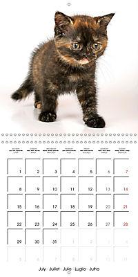 Persian Kittens (Wall Calendar 2019 300 × 300 mm Square) - Produktdetailbild 7
