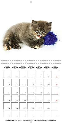 Persian Kittens (Wall Calendar 2019 300 × 300 mm Square) - Produktdetailbild 11
