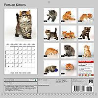 Persian Kittens (Wall Calendar 2019 300 × 300 mm Square) - Produktdetailbild 13