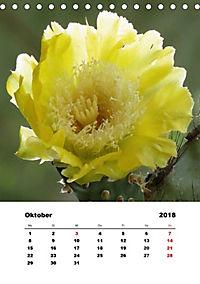 Peru - Ecuador (Tischkalender 2018 DIN A5 hoch) - Produktdetailbild 10