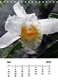 Peru - Ecuador (Tischkalender 2018 DIN A5 hoch) - Produktdetailbild 5