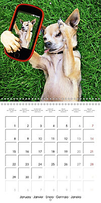 Pet Selfies (Wall Calendar 2018 300 × 300 mm Square) - Produktdetailbild 1