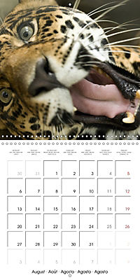 Pet Selfies (Wall Calendar 2018 300 × 300 mm Square) - Produktdetailbild 8