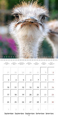 Pet Selfies (Wall Calendar 2018 300 × 300 mm Square) - Produktdetailbild 9