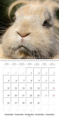 Pet Selfies (Wall Calendar 2018 300 × 300 mm Square) - Produktdetailbild 11