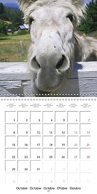 Pet Selfies (Wall Calendar 2018 300 × 300 mm Square) - Produktdetailbild 10