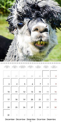 Pet Selfies (Wall Calendar 2018 300 × 300 mm Square) - Produktdetailbild 12