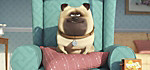 Pets - Produktdetailbild 6