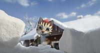 Pettersson und Findus - Das schönste Weihnachten überhaupt - Produktdetailbild 5