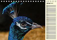 Pfaue. Prächtig und schillernd (Tischkalender 2019 DIN A5 quer) - Produktdetailbild 1
