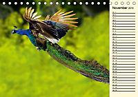 Pfaue. Prächtig und schillernd (Tischkalender 2019 DIN A5 quer) - Produktdetailbild 11