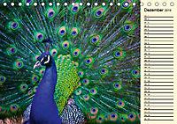 Pfaue. Prächtig und schillernd (Tischkalender 2019 DIN A5 quer) - Produktdetailbild 12