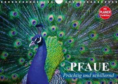 Pfaue. Prächtig und schillernd (Wandkalender 2019 DIN A4 quer), Elisabeth Stanzer