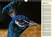 Pfaue. Prächtig und schillernd (Wandkalender 2019 DIN A4 quer) - Produktdetailbild 1