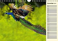 Pfaue. Prächtig und schillernd (Wandkalender 2019 DIN A4 quer) - Produktdetailbild 11