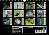 Pfaue. Prächtig und schillernd (Wandkalender 2019 DIN A4 quer) - Produktdetailbild 13