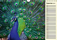 Pfaue. Prächtig und schillernd (Wandkalender 2019 DIN A4 quer) - Produktdetailbild 12
