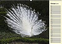 Pfaue. Prächtig und schillernd (Wandkalender 2019 DIN A2 quer) - Produktdetailbild 10