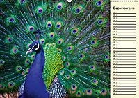 Pfaue. Prächtig und schillernd (Wandkalender 2019 DIN A2 quer) - Produktdetailbild 12