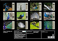 Pfaue. Prächtig und schillernd (Wandkalender 2019 DIN A2 quer) - Produktdetailbild 13