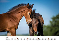 Pferde 2019 - Produktdetailbild 5
