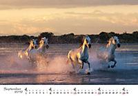 Pferde 2019 - Produktdetailbild 9