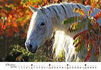 Pferde 2019 - Produktdetailbild 10