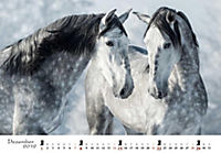 Pferde 2019 - Produktdetailbild 12