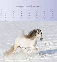 Pferde 2019 - Postkartenkalender - Produktdetailbild 12