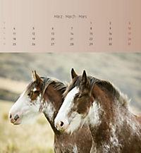 Pferde 2019 - Postkartenkalender - Produktdetailbild 3