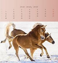 Pferde 2019 - Postkartenkalender - Produktdetailbild 1