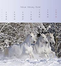 Pferde 2019 - Postkartenkalender - Produktdetailbild 2