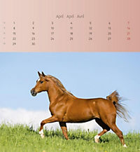 Pferde 2019 - Postkartenkalender - Produktdetailbild 4