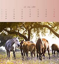 Pferde 2019 - Postkartenkalender - Produktdetailbild 7
