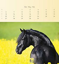 Pferde 2019 - Postkartenkalender - Produktdetailbild 5