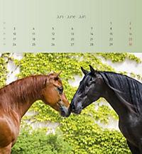 Pferde 2019 - Postkartenkalender - Produktdetailbild 6