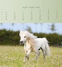 Pferde 2019 - Postkartenkalender - Produktdetailbild 8