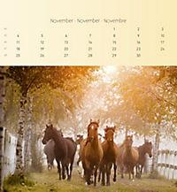Pferde 2019 - Postkartenkalender - Produktdetailbild 11