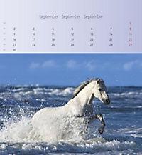 Pferde 2019 - Postkartenkalender - Produktdetailbild 9