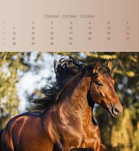 Pferde 2019 - Postkartenkalender - Produktdetailbild 10