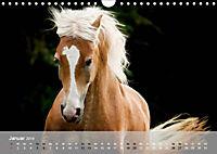 Pferde - Anmut und Stärke gepaart mit Magie (Wandkalender 2019 DIN A4 quer) - Produktdetailbild 1