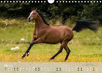 Pferde - Anmut und Stärke gepaart mit Magie (Wandkalender 2019 DIN A4 quer) - Produktdetailbild 5