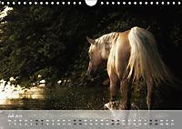 Pferde - Anmut und Stärke gepaart mit Magie (Wandkalender 2019 DIN A4 quer) - Produktdetailbild 7