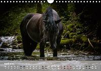 Pferde - Anmut und Stärke gepaart mit Magie (Wandkalender 2019 DIN A4 quer) - Produktdetailbild 4